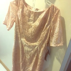 Adrianna Papell Short Lace Dress, Sz 6 Pink NWT